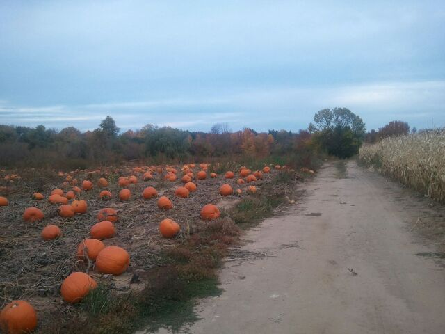 Pumpkin Patch Near Jackson Wisconsin