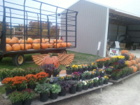 Seasonal Flowers For Sale Ozaukee County