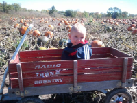 Wagon Rides at Cedarburg Farm