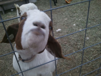 Petting Zoo Field Trip in Ozaukee