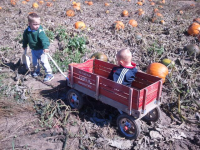 Jackson Kids Pulling Wagon in Pumpkin Patch