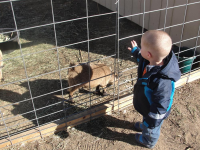 Baby Meeting Goat