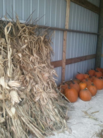 Corn Stalks and Pumpkins Ozaukee County