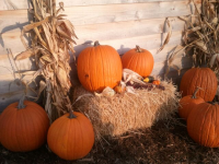 Pumpkin and Hay Bale Decorations Ozaukee County