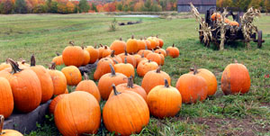 Pumpkin Patch Cedarburg